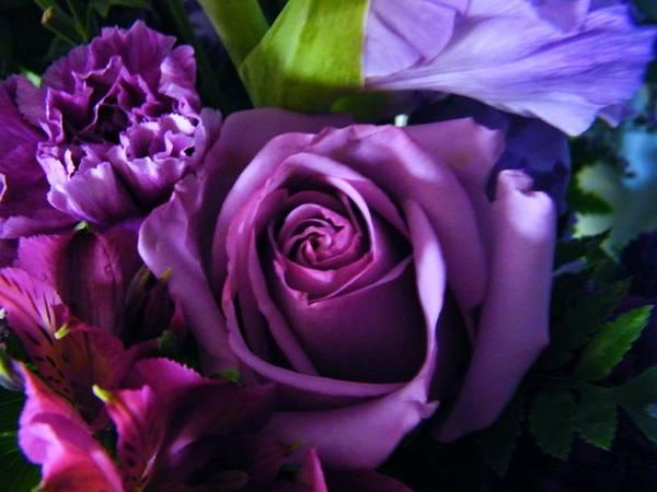 Purple Art Print featuring the photograph Purple Rose by Les Pheil