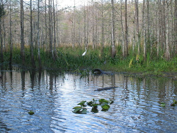 Everglades Art Print featuring the photograph Quiet Moment In The Glades by Arry Murphey