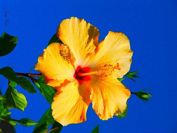 Flower Art Print featuring the photograph Reaching For The Sky by Judy Waller