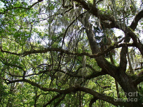 Tree Art Print featuring the photograph Reaching by Stephanie Richards