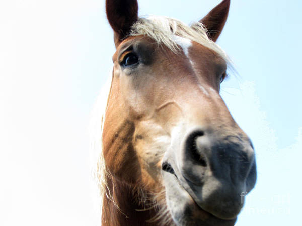 Horse Art Print featuring the photograph Really by Amanda Barcon