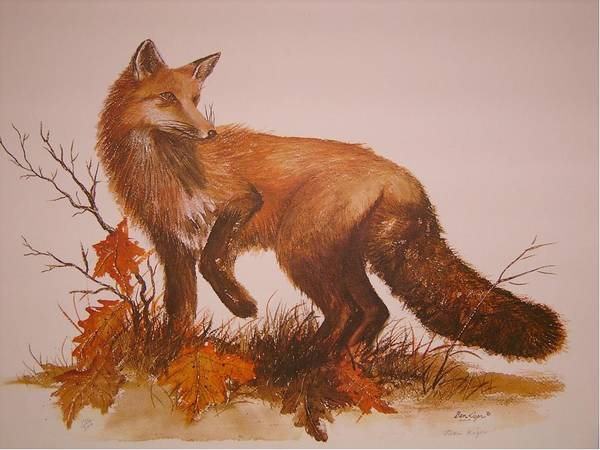 Nature Art Print featuring the painting Red Fox by Ben Kiger