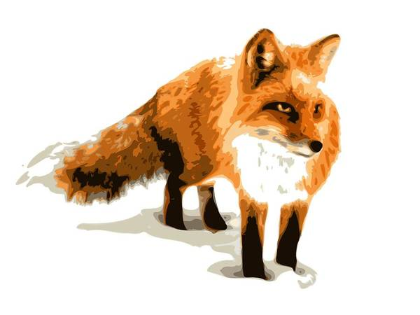 Fox Art Print featuring the digital art Red Fox In Winter by DB Artist