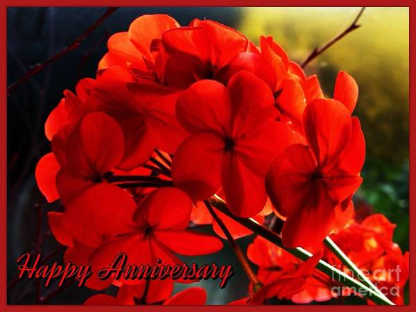 Red Geranium Art Print featuring the photograph Red Geranium Anniversary Greeting by Joan-Violet Stretch