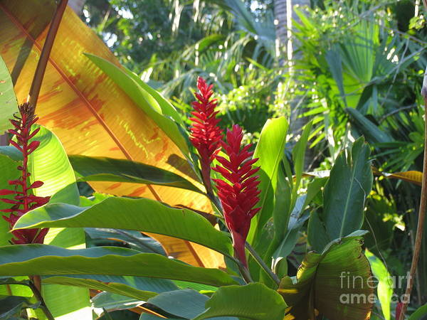 Red Art Print featuring the photograph Red Ginger by Stephanie Richards