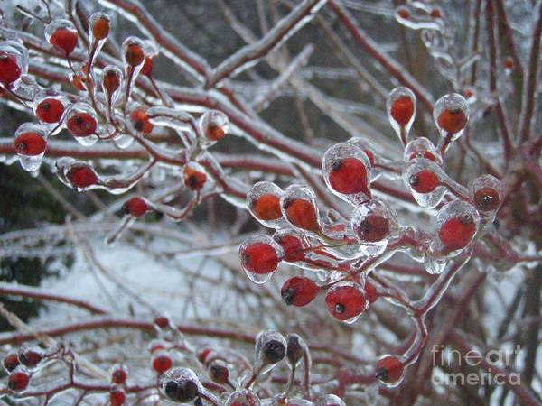 Berries Red Ice Storm Art Print featuring the photograph Red Ice Berries by Kristine Nora