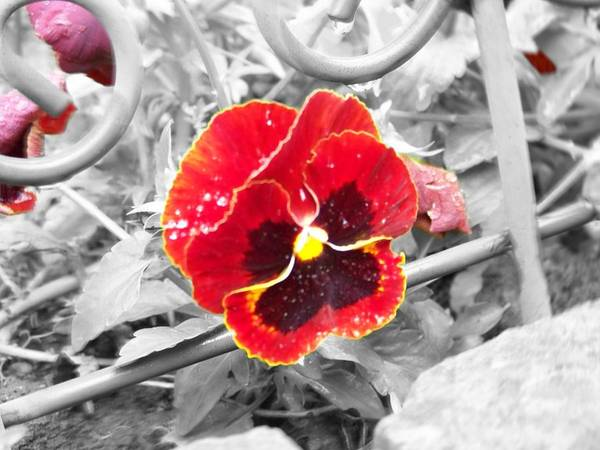 Flowers Art Print featuring the photograph Red by Jessica Burgett