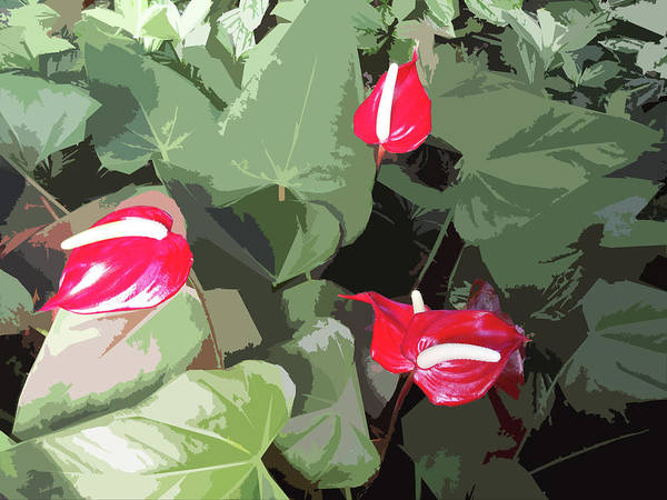 Plant Art Print featuring the photograph Red Plant by Adina Campbell