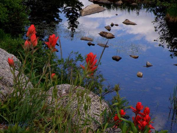 Landscapes F;oers Indian Paintbrush Water Reflections Clouds Colorado Indian Peaks Art Print featuring the photograph Red White And Blue by George Tuffy