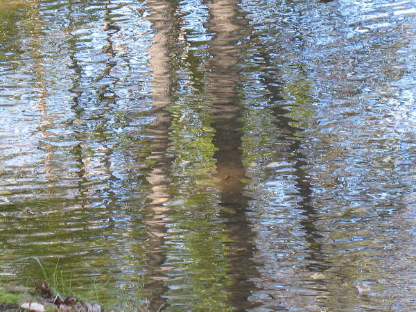 Water Art Print featuring the photograph Reflecting Trees by Janet Dickinson