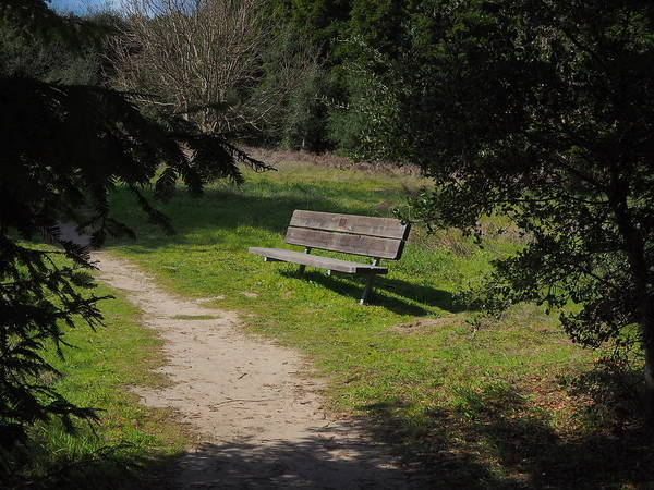 Landscape Art Print featuring the photograph Rest Along The Path by Richard Thomas