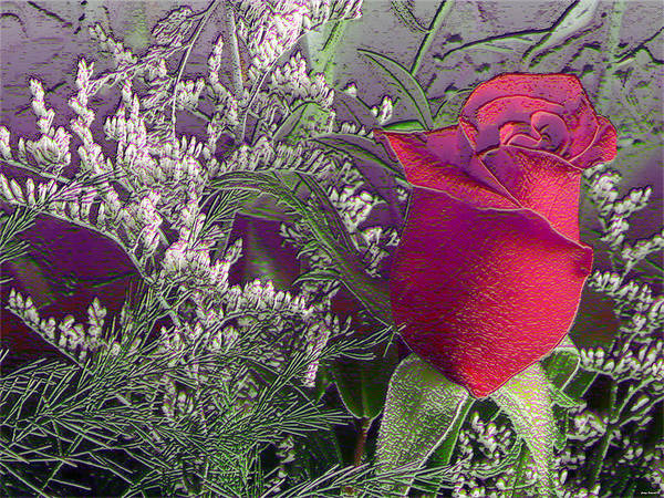 Rose Photography Art Print featuring the photograph Rose And Babies Breath by Evelyn Patrick
