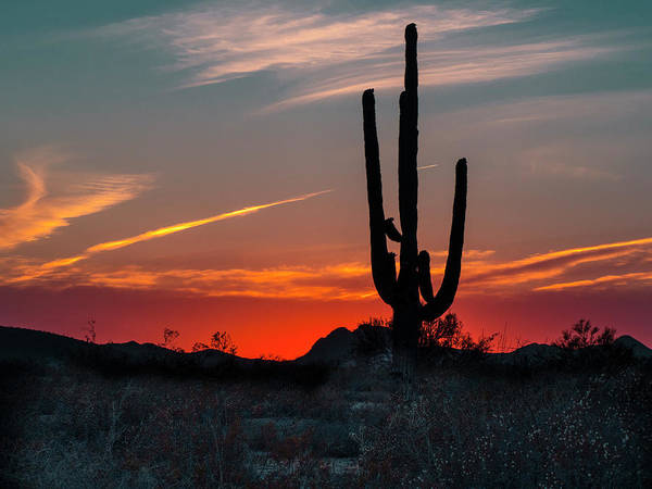 Pennysprints Art Print featuring the photograph Sagauro Sunset by Penny Lisowski