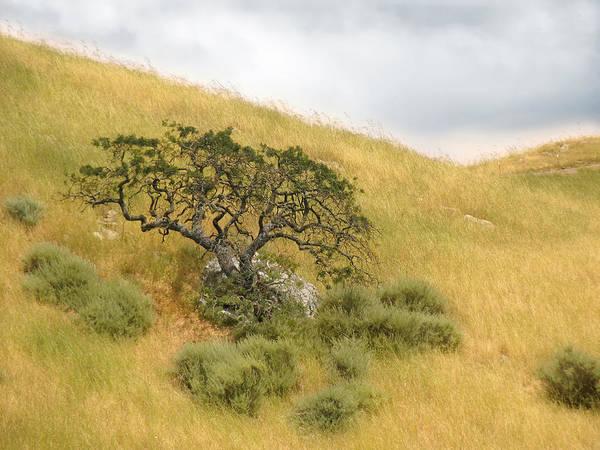 Landscape Art Print featuring the photograph Sage Under Oak by Karen W Meyer