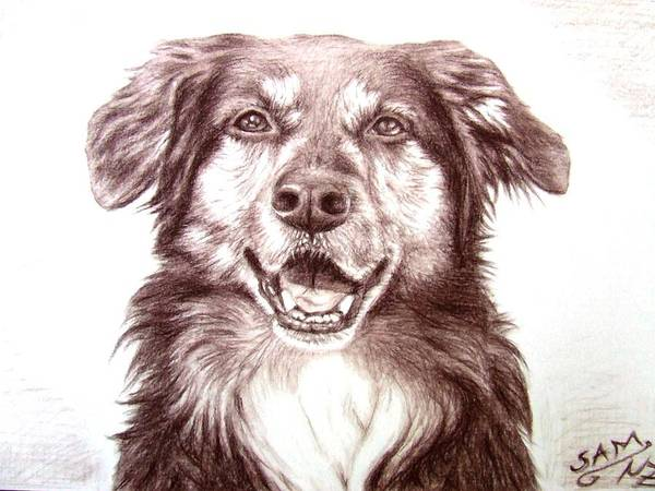 Dog Art Print featuring the drawing Sam by Nicole Zeug
