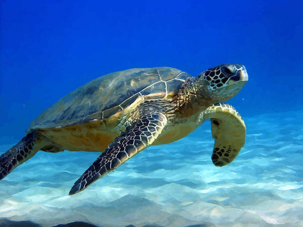 Turtle Art Print featuring the photograph Sea Turtle Blue by Peter Oconor