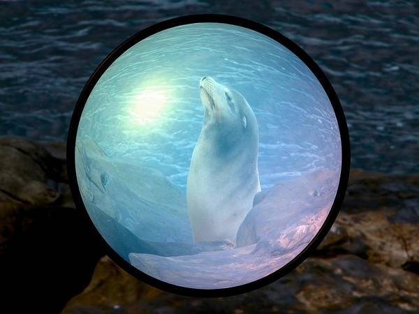 Natural Art Print featuring the photograph Seal by Guillermo Mason