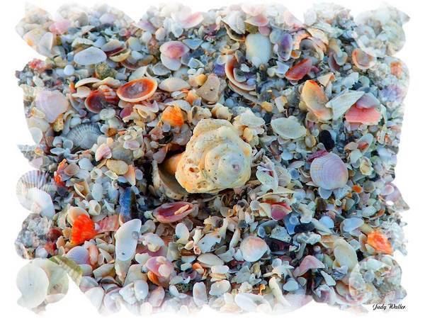 Shells Art Print featuring the digital art Shells by Judy Waller