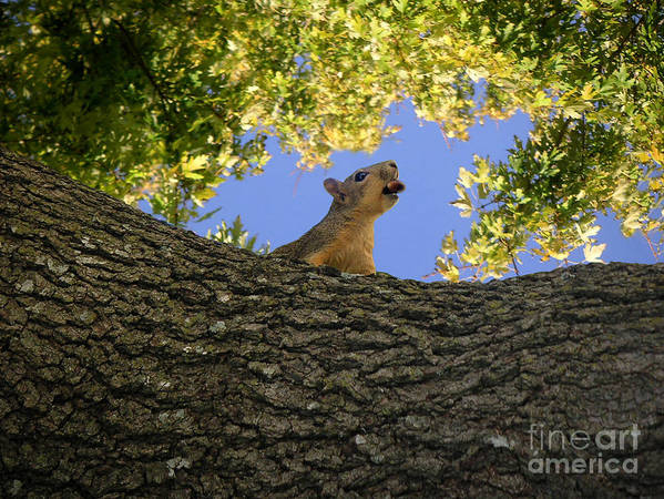 Nature Art Print featuring the photograph Show But Not Tell by Lucyna A M Green