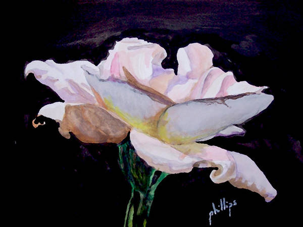 White Rose Art Print featuring the painting Single White Rose by Jim Phillips