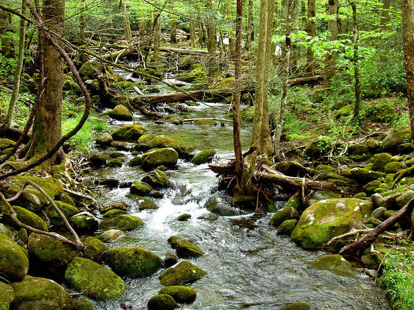 Smoky Mountains Art Print featuring the photograph Smoky Mountain Stream 1 by Nancy Mueller