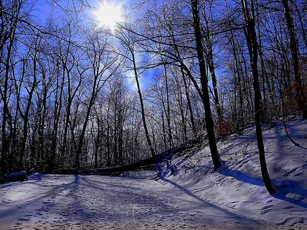 Snow Art Print featuring the photograph Snow Covered Path by Kevin Jackson