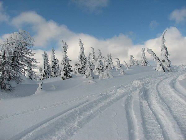Photograph Snow Art Print featuring the photograph Snow Pass Bc High Country by Janice Robertson