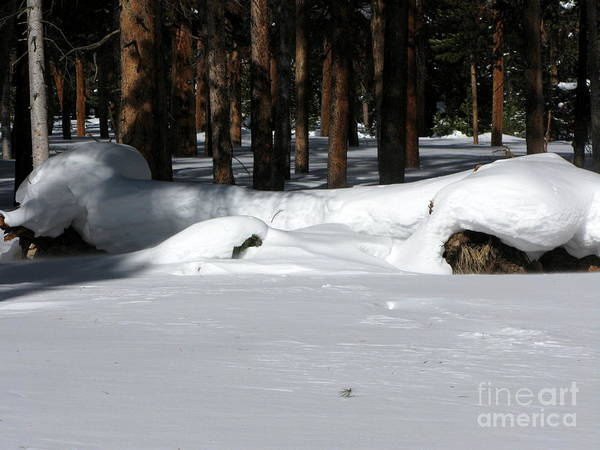 Snow Art Print featuring the photograph Snowy Log by PJ Cloud