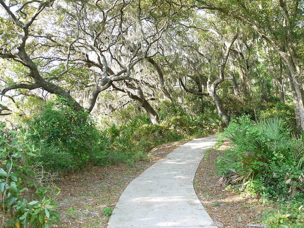 Twisted Trees Art Print featuring the photograph Spring Walkway by Bea Godwin
