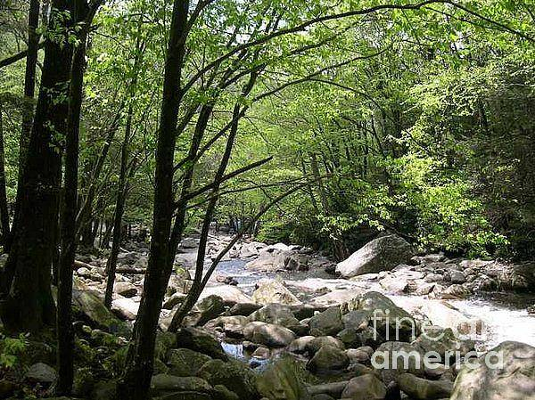 Nature Art Print featuring the photograph Springtime In The Smoky Mountains by Barb Montanye Meseroll