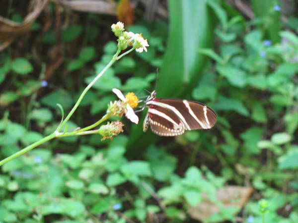 Nature Art Print featuring the photograph Stripped Butterfly by Gloria Byler