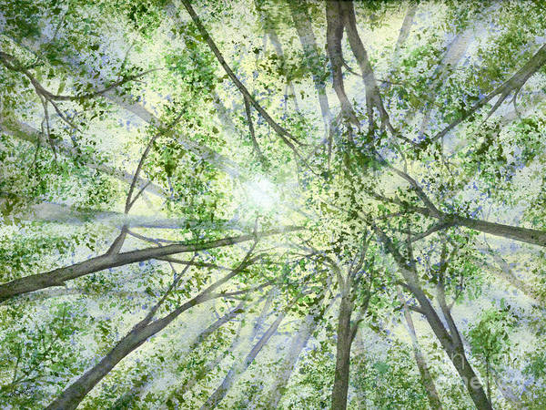 Trees Art Print featuring the painting Summer Rays by Lynn Quinn
