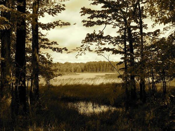 Art Print featuring the photograph Summer Wetlands by Trisha Dahm