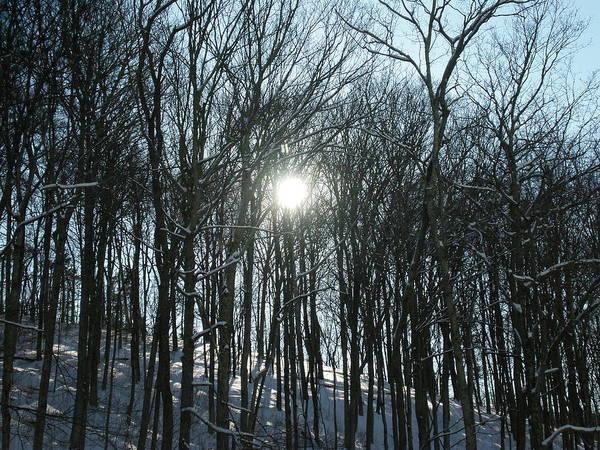 Sun Art Print featuring the photograph Sun Through The Trees by Martie DAndrea