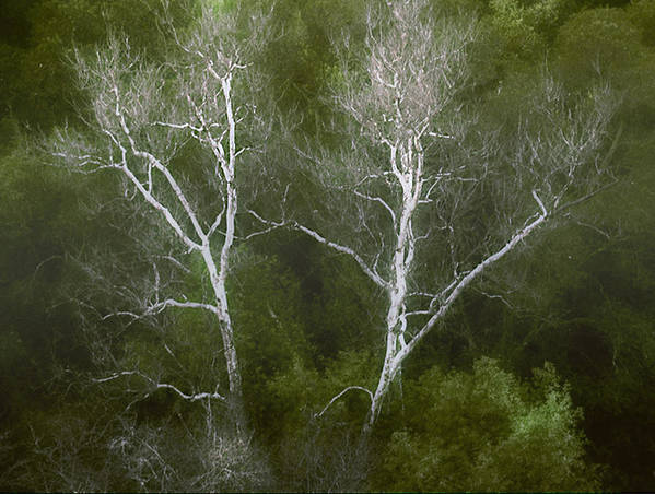 Landscape Art Print featuring the photograph Sunol - Twins by Karen W Meyer