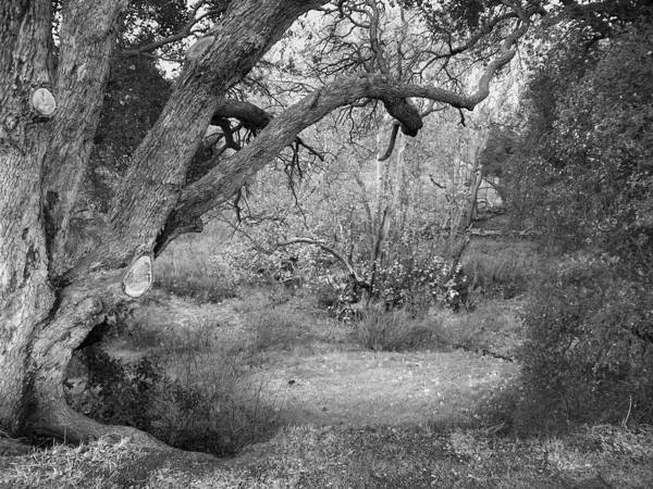 Landscape Art Print featuring the photograph Sycamore Grove Black And White by Karen W Meyer