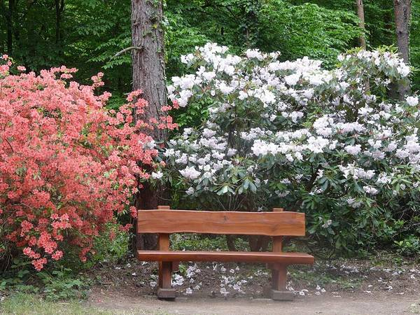 Spring Art Print featuring the photograph The Bench Of Peace And Pleasure by Attila Balazs