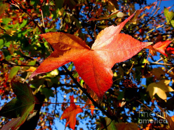 Fall Art Print featuring the photograph The Flavor Of Fall by PJ Cloud