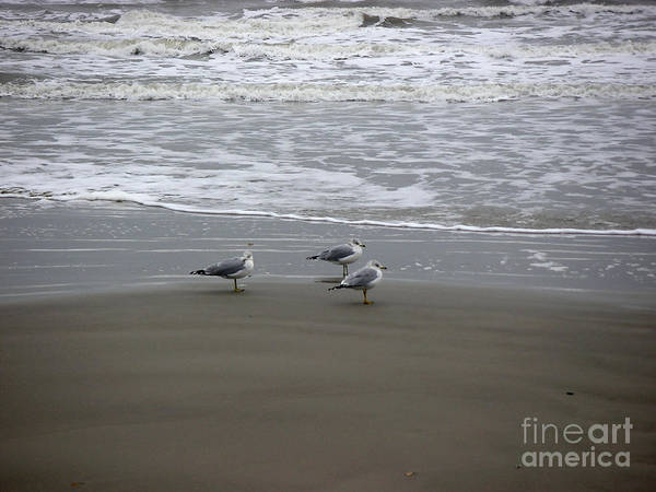 Nature Art Print featuring the photograph The Gulf In Shades Of Gray - Formation by Lucyna A M Green