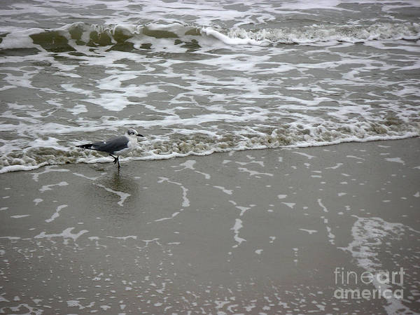 Nature Art Print featuring the photograph The Gulf In Shades Of Gray - On The Edge by Lucyna A M Green