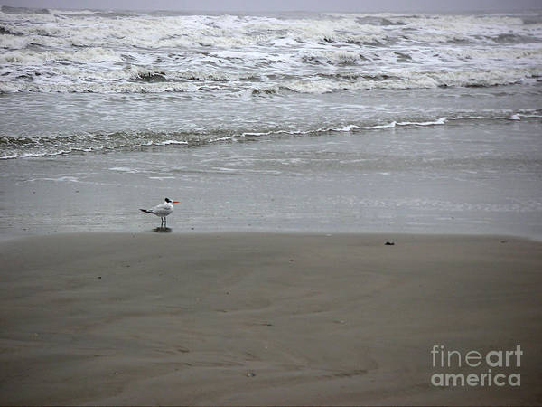 Nature Art Print featuring the photograph The Gulf In Shades Of Gray - Seaing by Lucyna A M Green