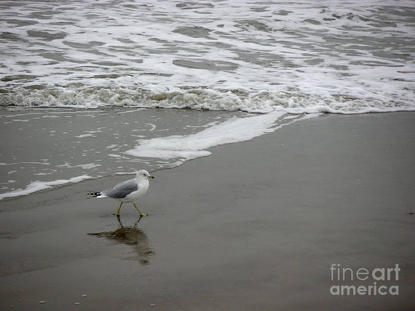 Nature Art Print featuring the photograph The Gulf In Shades Of Gray - Strutting by Lucyna A M Green