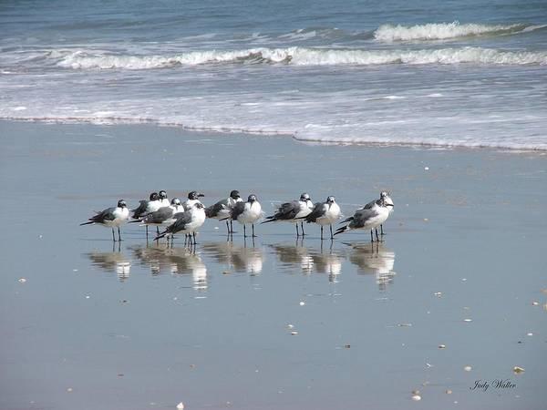 Beach Art Print featuring the photograph The Gull Gang by Judy Waller