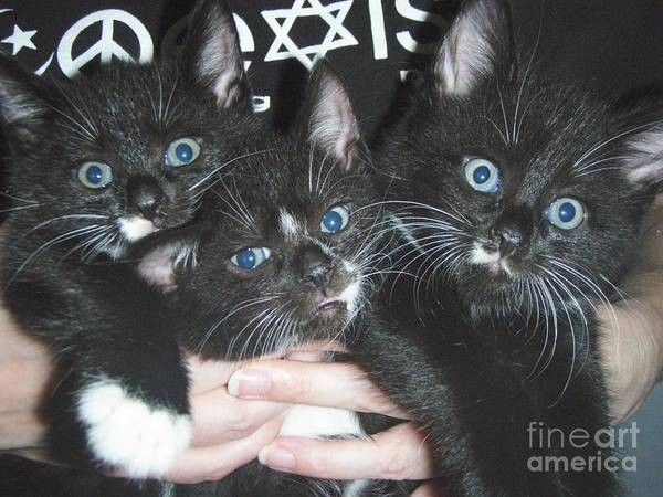 Kittens Art Print featuring the photograph The Kittidiots by Kristine Nora