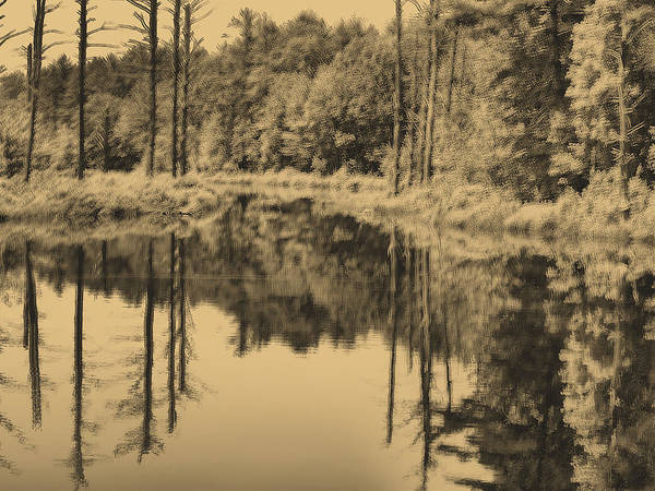 The Lake Art Print featuring the photograph the Lake by Kevin Roberto
