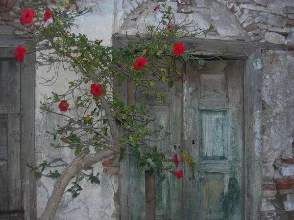 Flowers Art Print featuring the photograph The Old Door And The Rose Bush by Wilhelm Terrada & The Old Door And The Rose Bush Art Print by Wilhelm Terrada