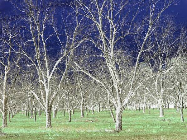 Pecan Art Print featuring the photograph The Pecan Grove by Judy Waller