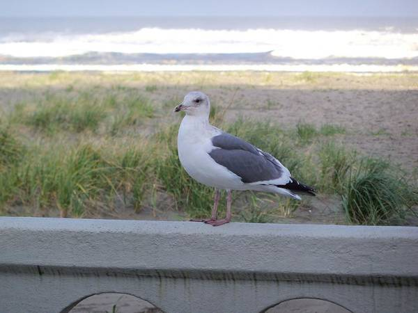 Seagull Art Print featuring the photograph The Soldier by Julie Bell