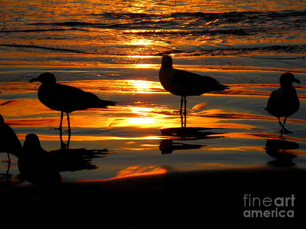 Sunset Art Print featuring the photograph The Sun Has Nearly Set by PJ Cloud