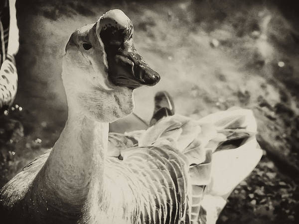 Philadelphia Art Print featuring the photograph The Ugly Duckling by Bill Cannon